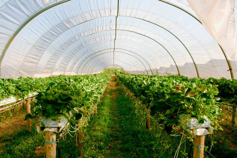 Smart Agrifood